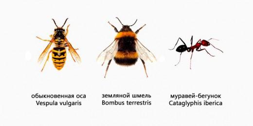 феромоны насекомых
