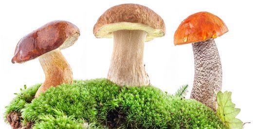 запах грибов