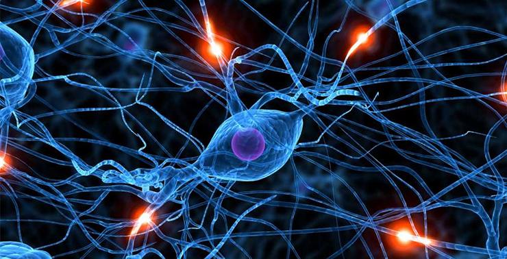 электричество в живой клетке