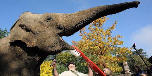 зубная паста для слона
