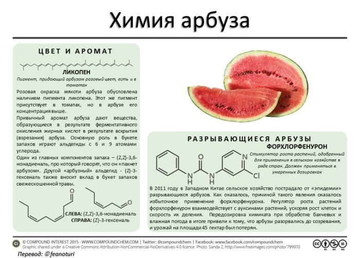 химия арбуза в инфографике