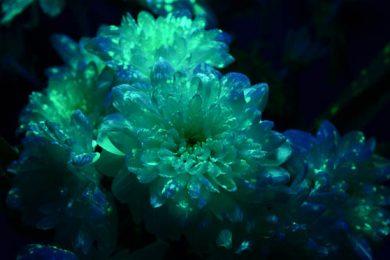 светящийся цветок