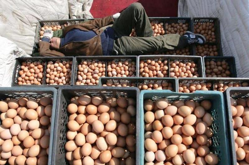 китайские поддельные яйца